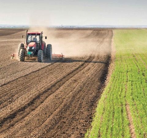 الزراعة نفط العراق الدائم